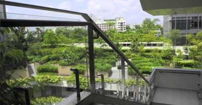 Singapore: Biophilic City (2012)