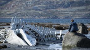 Leviathan (2014): Kritik zum oscarnominierten Filmdrama