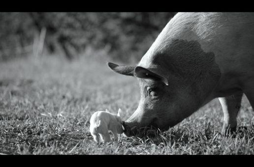 GUNDA (2020): Kritik. Heilige Kreaturen, spektakulär inszeniert.