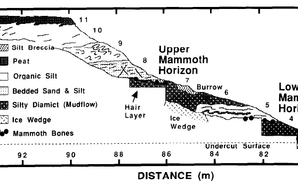 Colorado Creek mammoth stratigraphy