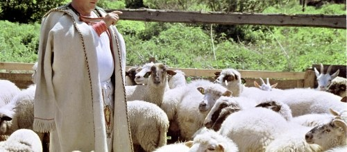 Ciobanul si functionarul