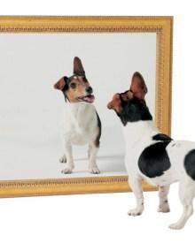 Casa Celor 1000 de oglinzi