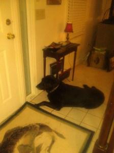 Sam the guard dog