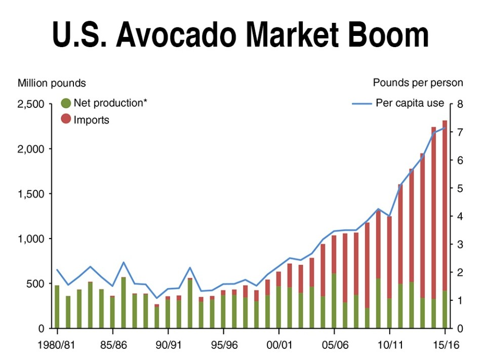 The U.S. market for avocados dwarfs every other country, and the rapid growth shows little sign of stopping. If Colombian growers can export avocados in large quantities, the economic potential is vast. (Chart via USDA)