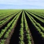 La réforme foncière peut relancer la productivité de l'agriculture africaine (rapport de la  Banque mondiale)