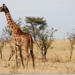 Kenya: les taux d'intérêt dépassent la cime des arbres