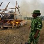 Faut-il brûler le stock d'ivoire pour sauver les éléphants ?