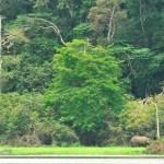 Demarrage du fonds vert pour l'Afrique centrale