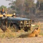 Flasback: le Safari de la SFI en Afrique (article et réaction)