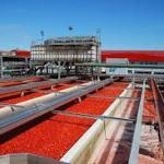 Nigéria : L'usine de transformation de tomates de Dangote enfin en marche