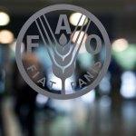 La FAO appelle à la promotion de la biodiversité