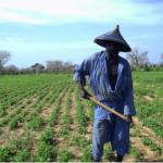 Sénégal: La Banque Mondiale soutient les petits agriculteurs