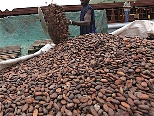 0508-39948-le-cameroun-a-produit-269-495-tonnes-de-cacao-au-cours-de-la-campagne-2015-2016_L