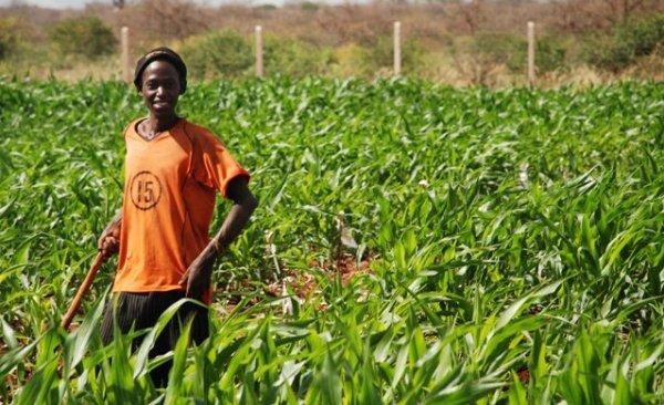 africanfarmer