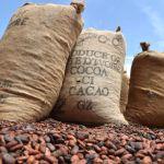 Côte d'Ivoire: l'Etat baisse fortement le prix du cacao