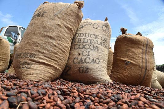 4888409_6_79f8_premier-producteur-mondial-de-cacao-la-cote_146e00613f90012e01940f0995c3f718