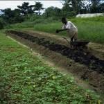 Gabon:lancement d'un fonds national dédié au développement agricole