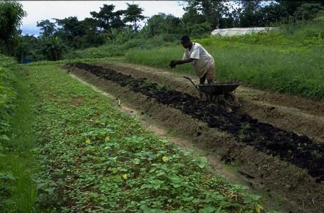 agriculture-agricultureperiurbaine-afd-1