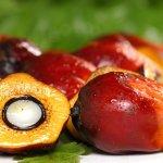 Le Groupe ivoirien Sifca va poursuivre ses exportations d'huile de palme au Sénégal