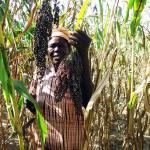 Injaro réalise sa sortie du capital de la plus importante entreprise semencière du Burkina Faso