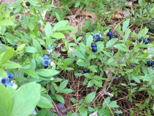 What can you find foraging