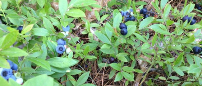 Saving money by foraging