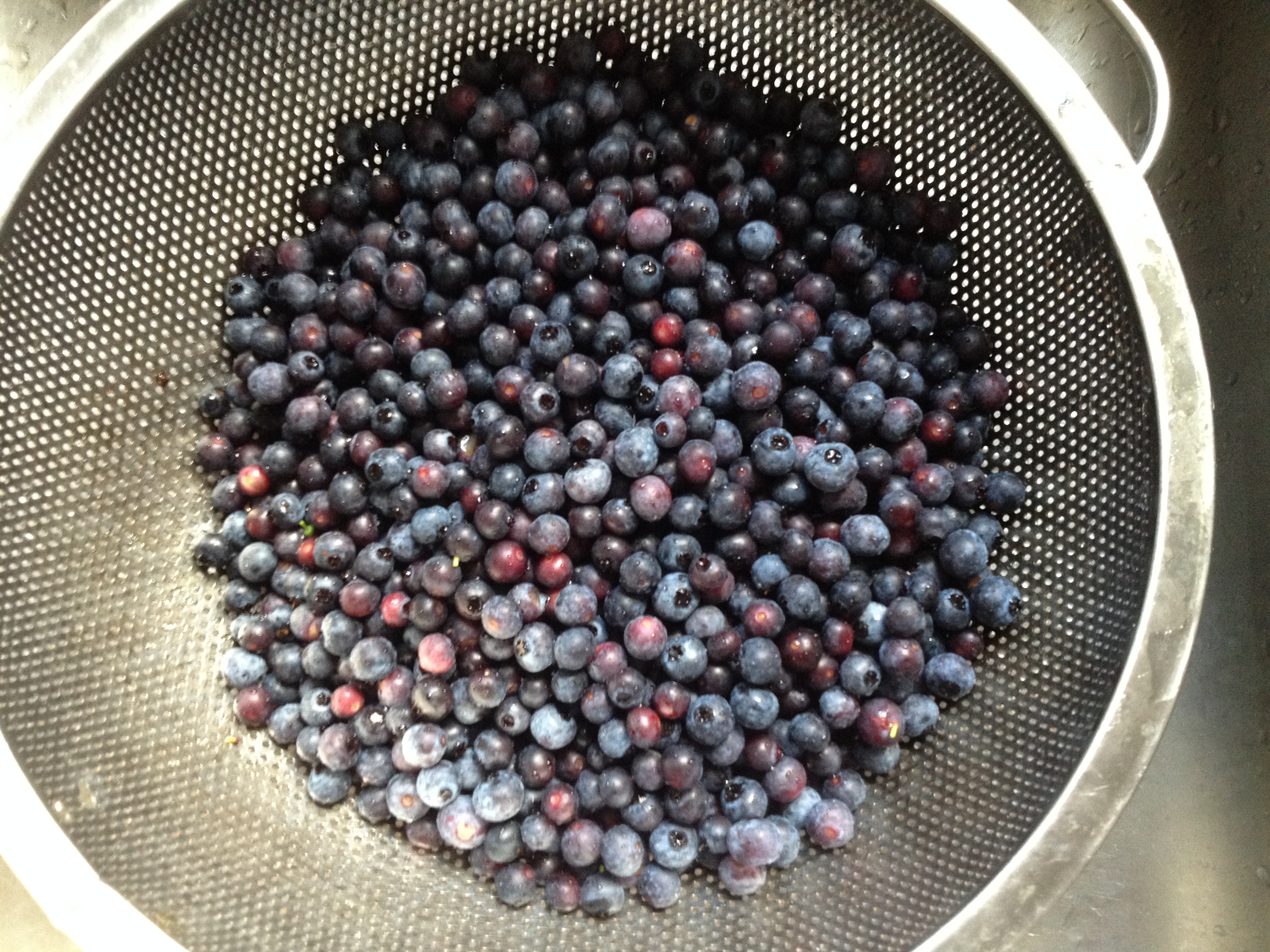 bowl of blue berries