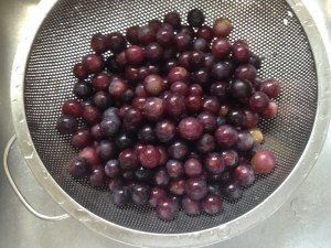 Foraging for Wild Grapes