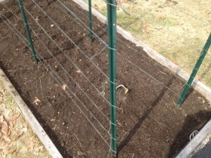 How to Grow Peas in a Garden