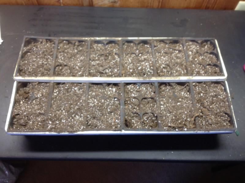 Tray Soil