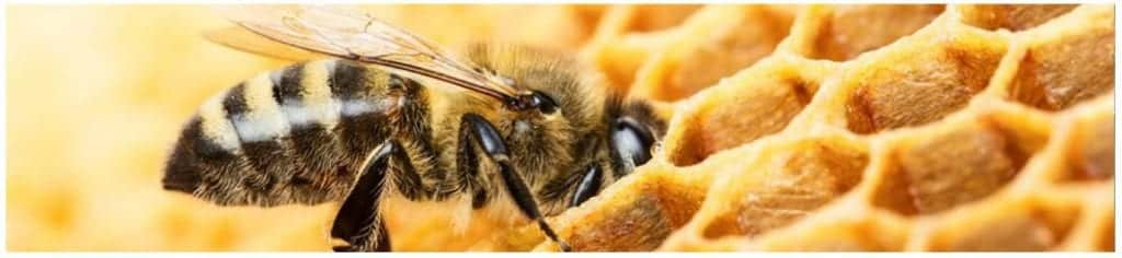 photo of bee in honeycomb representing bee money savvy
