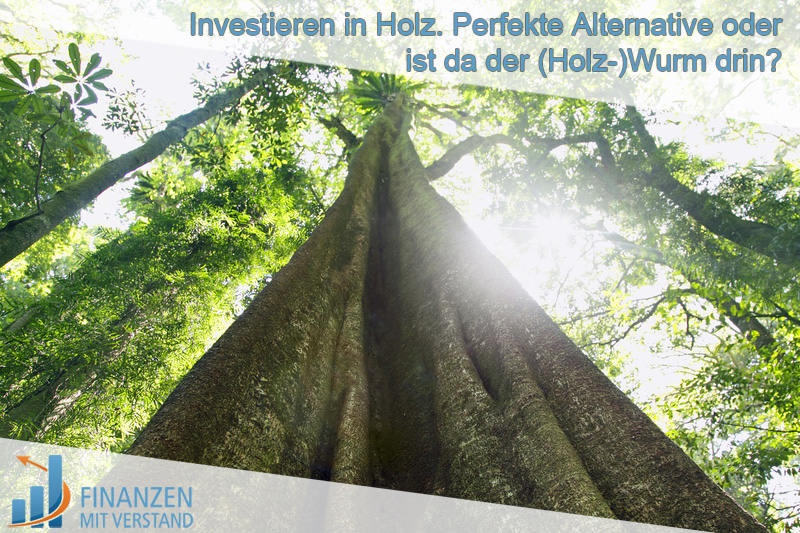 holz investment