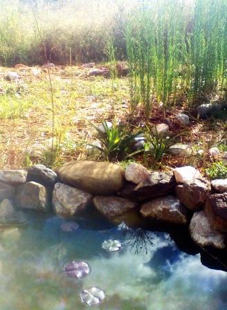 Le lin orné de fleurs bleues permet d´éloigner certains parasites et prépare le sol pour les prochaines cultures.