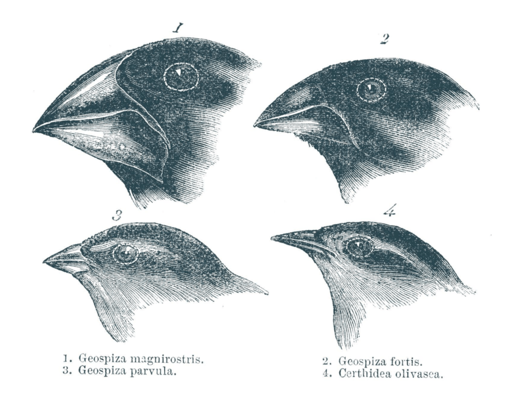 Learning From Darwin S Finches In Times Of Crisis