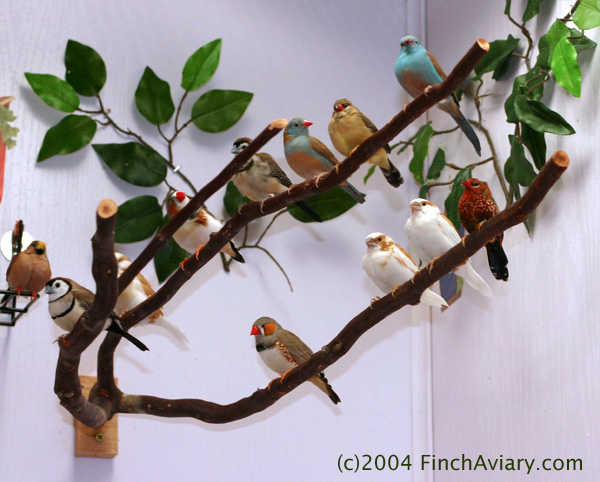Image result for finch aviary