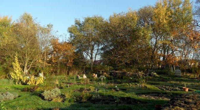 Herbstmorgen im November 2014