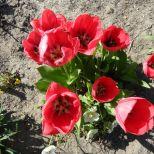 jcgSAM_13126[Web Garten] 21.04.2015 14_54_18