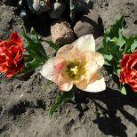 jcgSAM_13127[Web Garten] 21.04.2015 14_54_58