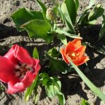 jcgSAM_13136[Web Garten] 21.04.2015 14_56_01
