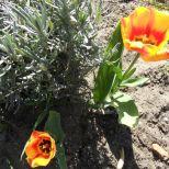 jcgSAM_13137[Web Garten] 21.04.2015 14_56_13
