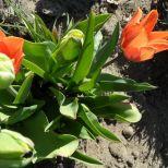 jcgSAM_13144[Web Garten] 21.04.2015 14_56_54
