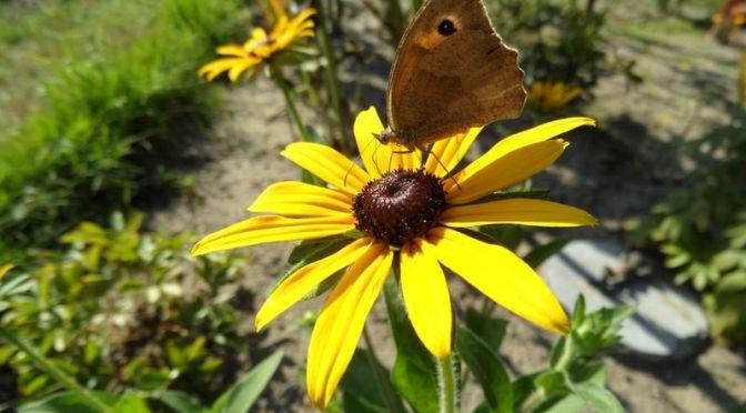 Neues von Schmetterlingen