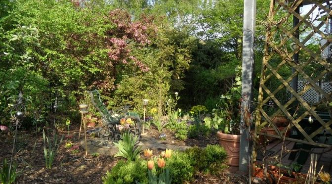 Blick in den Finkenkruger Garten 17.05.2012