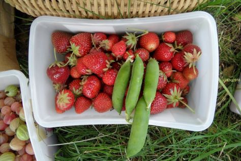 Erdbeeren und Erbsen