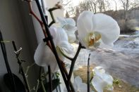 Orchideen am 04.02.2017