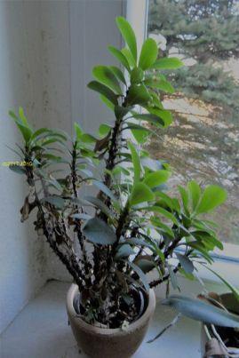 Eine Zimmerpflanze am 04.02.2017