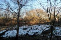 Unser Wintergarten am 04.02.2017
