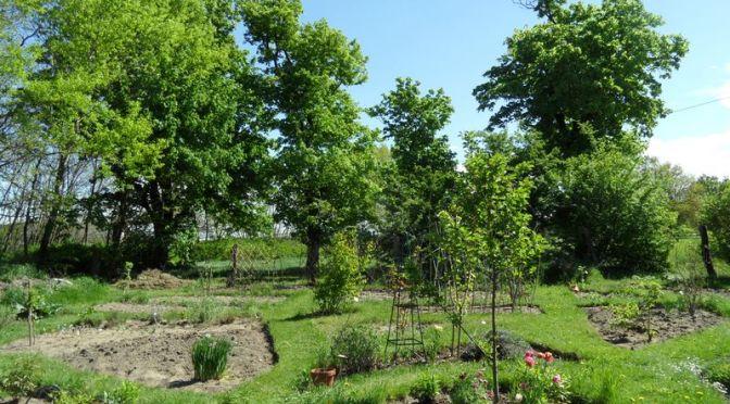 Ausschnitt des Gartens mit den Beeten Sauerkirsche, Christian , Wolfgang, Mangold am 01.05.2018