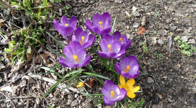 Seit gestern 22:58 Uhr ist Frühling