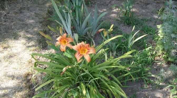 Blüten im Juli 2019